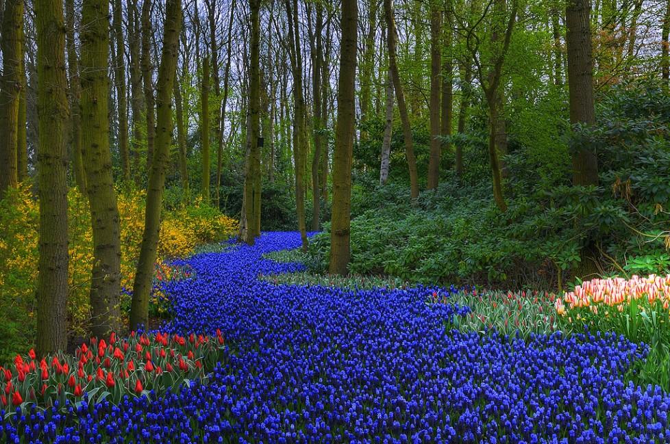 15 des plus beaux jardins du monde   Gerbesdangelica