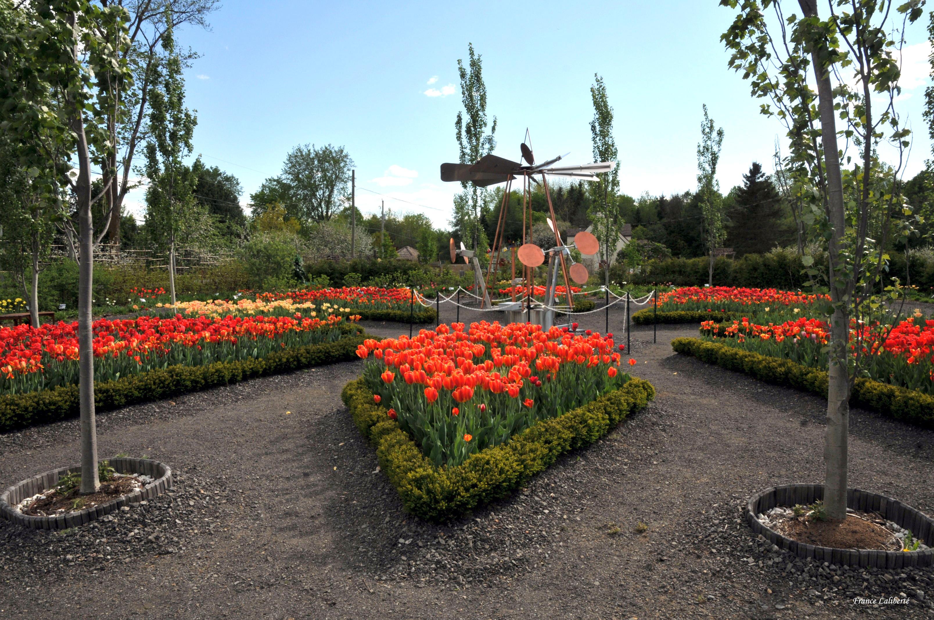 50 000 bulbes de tulipes jonquilles jacinthes gerbesdangelica - Quand planter les bulbes de tulipes et jonquilles ...
